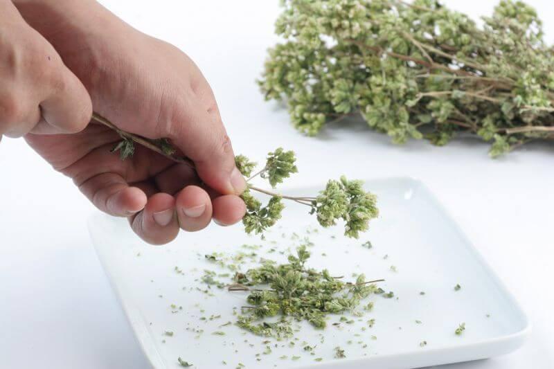 使用法は、こうやって枝から外してから、指先で細かくしたり、ザルで濾したりします。一枝切って、蒸し物料理に入れても美味ですよ。