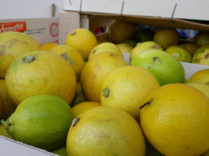 オリーブオイルと搾るレモン