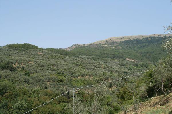 標高が高いオリーブオイル農園